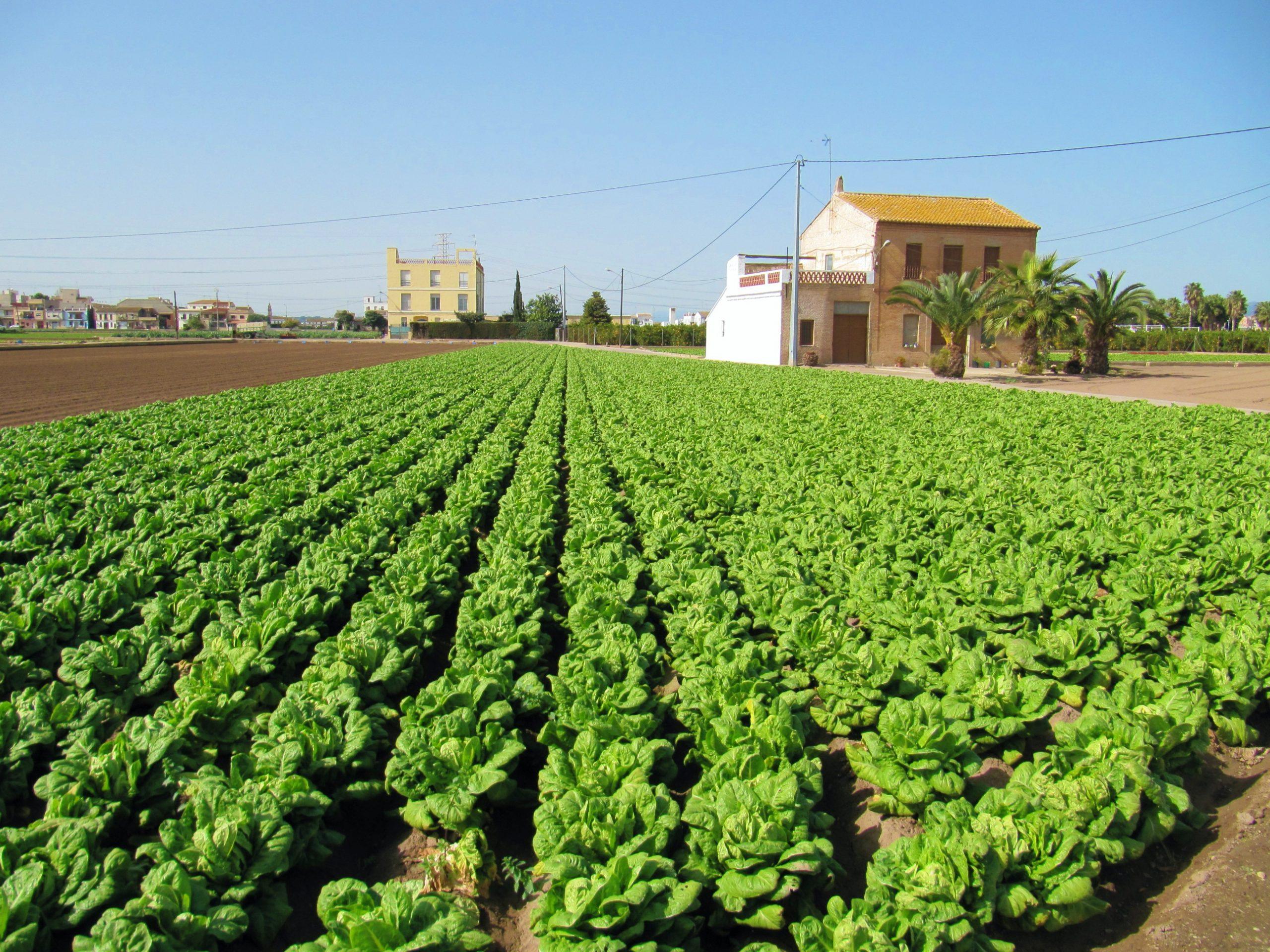 Estrategia Alimentaria del Ayuntamiento de València